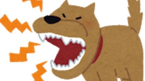犬に噛まれ新型コロナ…